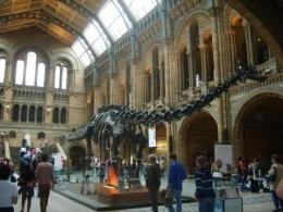 1-pm-natural-history-museum-london